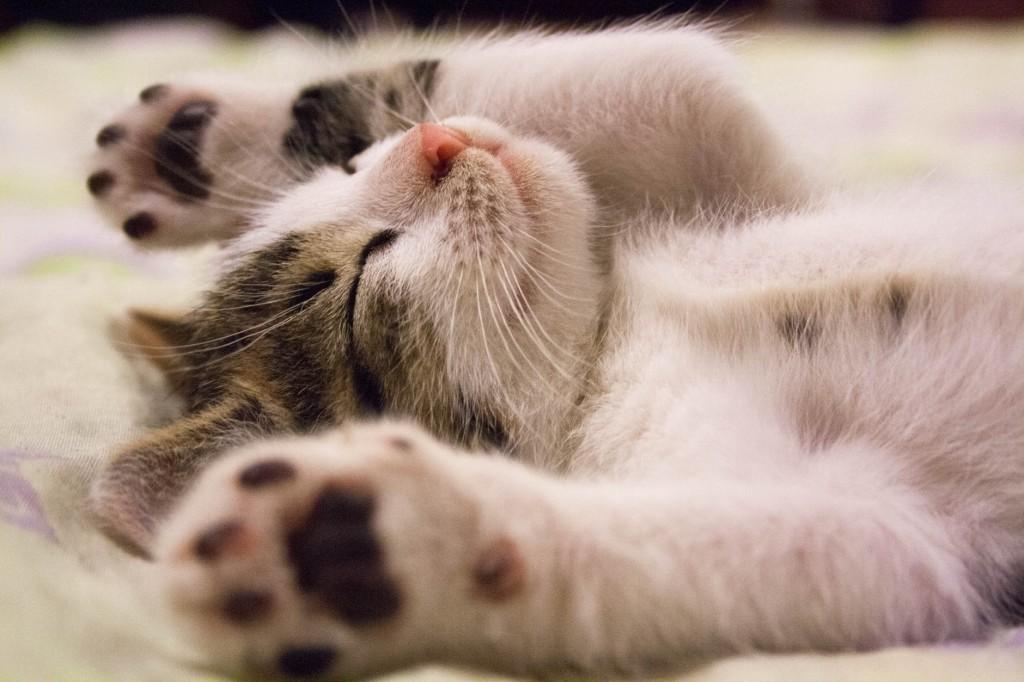 relaxáló cica